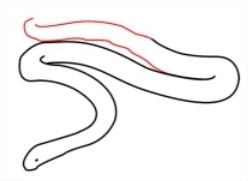 Comment dessiner un serpent méthode 4 étape 5