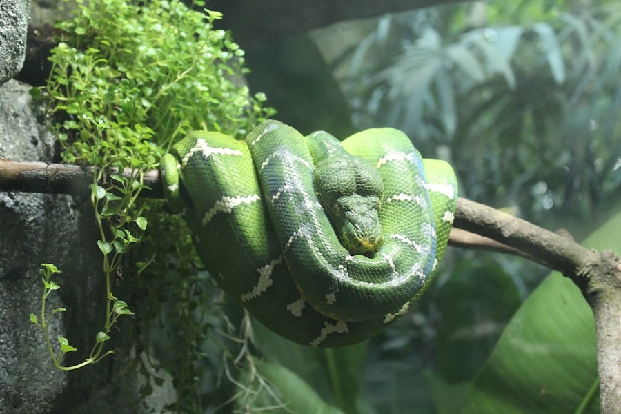 Le sommeil du serpent comment font-ils pour dormir