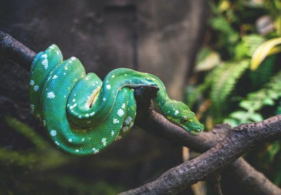 Les Serpents rêvent-ils