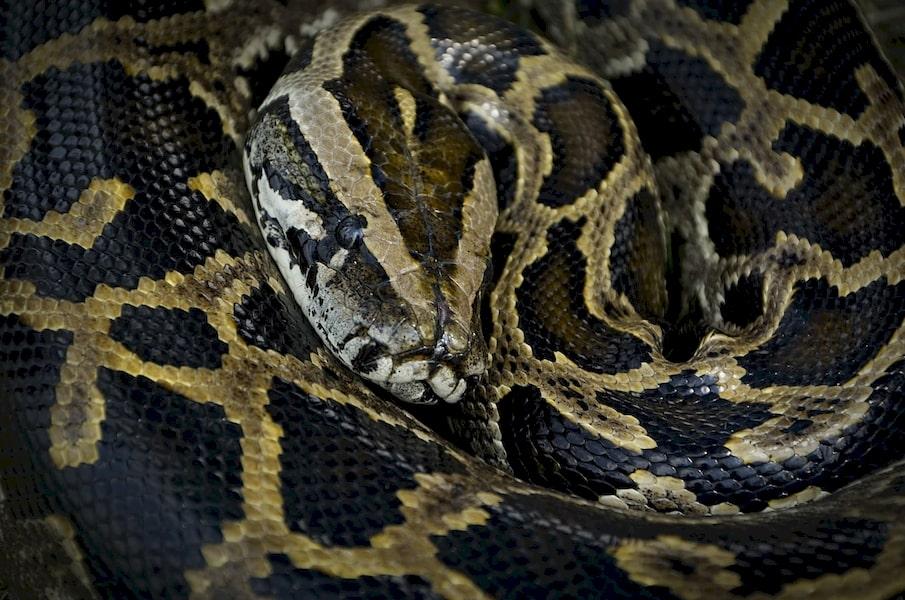 Les serpents dorment-ils
